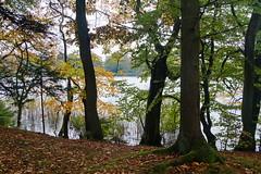 Igennem løvet (Steenjep) Tags: silkeborg sø lake efterår fall autumn silkeborglangsø forest skov park træ tree vand water løv leaf blad refleks reflex mos moss