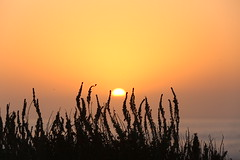 Sunset (Mettwoosch) Tags: monterey california usa america west coast sunset sky sun ocean pacific sea kalifornien amerika see ozean meer sonnenuntergang sonne himmel water wasser pazifik canon eos 5dm3 ef lens 5d3 outdoor light licht vacation holiday travel urlaub trip horizont