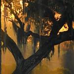 Live Oak Sunrise thumbnail