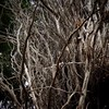 In The Sticks (Seeing Things My Way...) Tags: branch branches twigs sticks leaves perspective woods