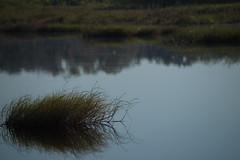Serenity (River-Life) Tags: riverlife florida nikon d5300 outdoors outdoor nature circlebbarreserve water reflection