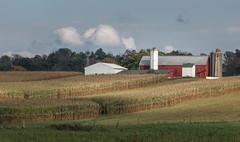 Amish Precision (TuthFaree) Tags: windmillwednesday hww windmill 7dwf amish corn harvest barn red green silo landscape autumn fall agriculture farm mthope ohio