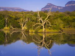 Under African Skies (RobertCross1 (off and on)) Tags: 75300mmf4867mzuiko africa em5 hoedspruit limpopo omd olympus southafrica za forest lake landscape mountains pond reflection safari trees water