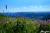 LILA FLOWERS (Sven Dost) Tags: lila flowers lumen mountains schwarzwald black forest holiday spring 2017 nikon d5100 nikkor 1855mm sven dost landscape landschaft