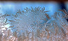 Iceflowers (Rolf-Schweizer) Tags: flowers ice eis winter cold artphotography art artist rolfschweizerfotografie rolfschweizer thechurchofjesuschristoflatterdaysaints toggenburg bauernverband bauer canon creative schweiz swiss switzerland suisse naturephotography nature natur life leben landscape landscapephotography keystone kirchejesuchristiderheiligenderletztentage heart hoffeld heaven harmony svizzera sky