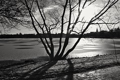Backlight, Hudiksvall (Stefano Rugolo) Tags: stefanorugolo pentaxk5 pentax k5 kepcorautowideanglemc28mm128 monochrome backlight hudiksvall hälsingland sweden sverige landscape lake sky silhouettes branches tree shadows light church ice snow flares lensflares