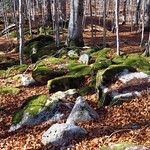 Pyrenean forest thumbnail
