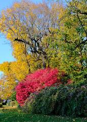 Colors on my Street (Bruce Livingston) Tags: asbury nj newjersey trees autumncolors explore