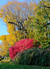Colors on my Street (Bruce Livingston) Tags: asbury nj newjersey trees autumncolors explore