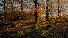 Light and shadow (catha.li) Tags: light lgg4 shadow forestimages naturewatcher soe swe sweden skåne