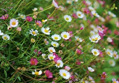 Flowers (LuckyMeyer) Tags: flower fleur blume blüte summer garden white rosa green