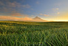 The Field Beckons (lantaw.com) Tags: southcotabato pineapplefield tupi sunrise mtmatutum mountain mindanao philippines