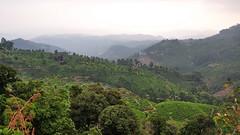 India - Kerala - Munnar - Tea Plantagen - 245 (asienman) Tags: india kerala munnar teaplantagen asienmanphotography