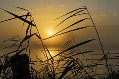 Magic Morning (4/14) (Frank-Martens) Tags: fog mist nebel sonnenaufgang steinhorsterbecken sunrise misty mystical mystisch hdr