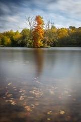 Etang de Commelles, Picardie (pascalct) Tags: wideangle ciel eau water arbre sky lac lake longexposure automne tree