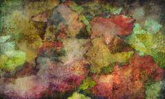 紅葉・もみじ-Maple (Bamboo Barnes - Artist.Com) Tags: maple もみじ 紅葉 autumn winter leaves ground colors red green blue tan brown yellow purple abstract manipulation texture japan bamboobarnes art digitalart