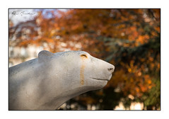 L'ours qui pleure (Rémi Marchand) Tags: ours sculpture dijon pompon oursblanc françoispompon canon5dmarkiii oursblancdepompon côtedor bourgogne automne jardindarcy sculpteuranimalier