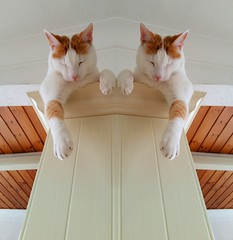 Sleepy cats! (Lindsaywhimsy) Tags: cats indoors reflection experimentalwork