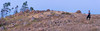 Together we shall rule the world (RobMacPhotography) Tags: canberra act australia mt arawang mountainside magpie flock hill a6000 sony panorama landscape birds grass