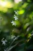 Kleine Schönheiten (Silaris Inc.) Tags: nahaufnahme bokeh pflanze blühen blüte freigestellt dof licht depthoffield natur gegenlicht bochum nordrheinwestfalen deutschland de
