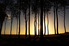 trees at sunset (Darek Drapala) Tags: trees tree sun sky sunset silhouette skyskape nature night evening forest panasonic poland polska panasonicg5 baltic color lumix light