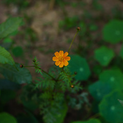 Flower (Anubhav Kr.) Tags: flower flowers focus sony alpha sonyalpha sonya6000 sonya6k fujian 35mm f16 saturday city nature colors colours bokeh newdelhi delhi india lightroom a6000