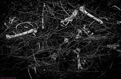 Polvo somos. Noviembre 2009 2 (Jazz Sandoval) Tags: 2009 elfumador españa exterior enlacalle blancoynegro búsquedas búsqueda blanco bn bw contraste calle curiosidad curiosity canarias cienciasnaturales digital day fotografíadecalle fotodecalle fotografíacallejera fotosdecalle huesos islascanarias ilustración intriga jazzsandoval lanzarote luz light monocromática monócromo negro nero naturaleza streetphotography streetphoto sombras suelo vegetal muerte abandono