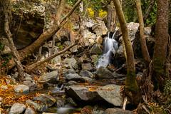 Caledonia Trail (121) (Polis Poliviou) Tags: nicosia autumn life polispoliviou polis poliviou πολυσ πολυβιου cyprus cyprustheallyearroundisland cyprusinyourheart yearroundisland zypern republicofcyprus κύπροσ cipro кипър chypre chipir chipre кіпр kipras ciprus cypr кипар cypern kypr ©polispoliviou2017 europe fall naturephotography forestphotography heritage mediterranean morning 2017 caledoniawaterfalls troodosmountains kalidoniawaterfalls naturepics forest tree trees trekking walking hiking nationalpark nationaltrail leaf leaves water waterfall waterfalls platanus platanustree planetree planetrees caledoniafalls naturetrail naturepath pinetree love relax relaxing longexposure