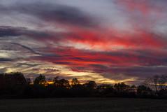 Crisp (Matt Champlin) Tags: november goodmorning morning nature sunrise beautiful geese migration weekend skies field farm rural canon 2017 landscape peaceful
