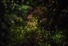 Mystiko Fantasma (M. Xeimonas) Tags: athens philopappou hill koukaki greece night light urbex nature leaves trees colours portrait ghost fantasma athenes grece nuit lumiere natura arbre feuilles automne autumn fall season fantôme double exposure doubleexposure forest bokeh blur blurred flou