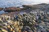 DSC_0339 (KOOLyaphotography) Tags: losangeles lagunabeach beachlife citylife laskyline griffithobservatory florallife flowers sunset beach koolyaphotography shorelife seagulls sealions seals coastline