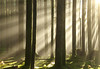 December Sun (Kristian Francke) Tags: forest sun december outdoors nature natural sunbeams sunrays sunny bc canada pentax bright silhouettes green landscape wood woodlands