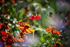 Floral Frenzy (Missy Jussy) Tags: flowers flora petals annual summer france orange breeze garden plants sunlight summertime canon canon5dmarkll canon70200mm