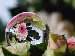 Bouquet sous verre (Mariette80) Tags: bouledeverre bouquet fleurs refraction