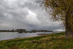 Rhein in Hitdorf (KL57Foto) Tags: deutschland europa fluss germany gewässer herbst hitdorf jahreszeitenundwetter kl57foto kontinente landschaften leverkusen leverkusenhitdorf nrw natur nordrheinwestfalen olympus penemp2 rhein rheinland rhine autumn