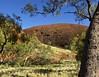 Landscape (Padmacara) Tags: australia katatjuta g11 rock tree sky explored