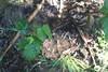 desenvolvendo a técnica (PucrsMichaelPeres) Tags: borrado blury nature