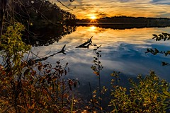 A Golden Sunset (Wes Iversen) Tags: holly hollystaterecreationarea michigan nikkor24120mm autumn clouds flare gold golden lakes logs sky sun sunset sunsets trees water