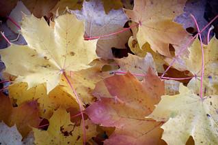Les feuilles sont tombées , c'est la fin de l'automne .