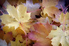 Les feuilles sont tombées , c'est la fin de l'automne . (Croc'odile67) Tags: nikon d3300 sigma contemporary 18200dcoshsmc foliage feuilles automne autumn nature