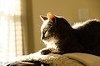Sunny Perch (vlxjeff) Tags: nikon d7000 cat sun sunny warm comfortable couch feline shadow sleeping