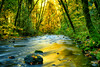 Do You Still Wait for Me, Dream Giver? (flashfix) Tags: october242017 2017inphotos victoria bc britishcolumbia canada nikond7100 nikon goldstreampark nature leaves moss sunlight forest bokeh yellow green branches woods 28mm landscape river trees flashfix flashfixphotography longexposure
