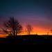 Mallusk_Sunrise_Nov2017 (ryan.c.dallas) Tags: sunrise sky morning skyline clouds nature canon eos 70d efs 1022mm landscape ireland northern trees colour