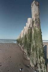 Les piquets en bois de la plage de Sangatte-3.jpg