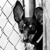 London-Paris18Nov201717-Edit.jpg (fredstrobel) Tags: dogs pawsatanta phototype atlanta blackandwhite usa animals ga pets places pawsdogs decatur georgia unitedstates us