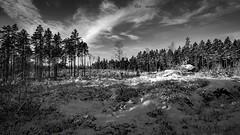 20171119003979 (koppomcolors) Tags: koppomcolors winter vinter skog forest snö snow värmland varmland sweden sverige scandinavia