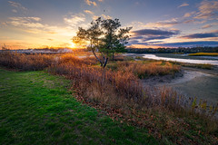 St-Mary's-By-The-Sea-Bridgeport-CT-USA_11202017-52 (Simmo1342) Tags: sunset colorful connecticut dreamy goldenhour landscape mood nature ngc northamerica outdoor scenic sky sonyalpha tranquillscene vibrant water grassland grass greenry view background tree