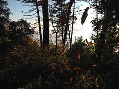 15 (emmess2) Tags: campiglia cinqueterre spezia autumn fall leaves
