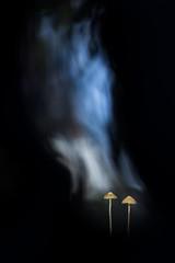 Effluve hivernale. (SweeP_64) Tags: effluve hivernale mushroom champignon macro proxi nature cyrille masseys 6ril