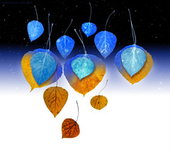 and so autumn becomes winter (marianna_a.) Tags: p2720436 autumn fall winter cold warm blue orange positive negative psd photoshop mariannaarmata leaf leaves snow